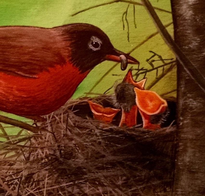Robin feeding her hungry, nested children
